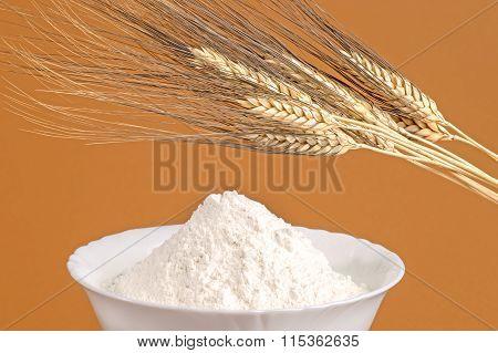 Rye-Ears and Rye-Flour