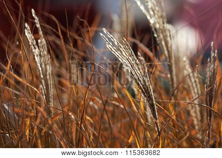 Tall grass blowing in wind against colorful sunset