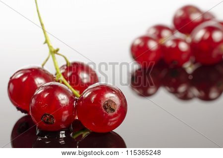 Branch of red currants