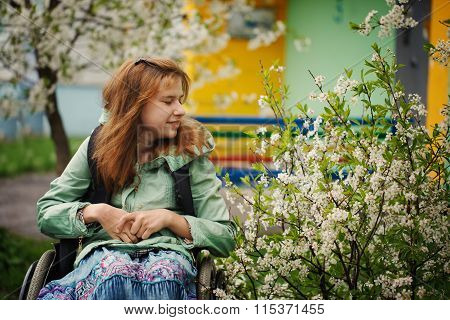 Young Woman In A Wheelchair Inhales Aroma Of The Blossoming Cher