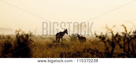 panorama of silhouette of animals on the grasslands of Kenya with Nairobi skyline in background