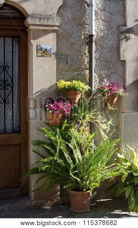 Flowers And Fern In Terracotta Pots