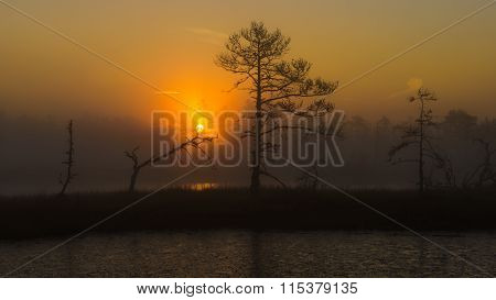 Sunrise in the bog