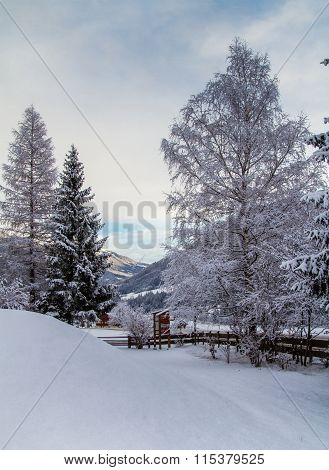 Snowbound trees in Austria