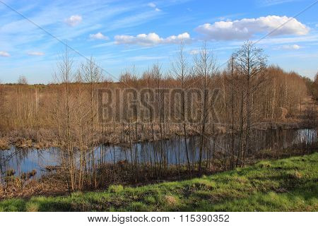 Spring Landscape With Many Trees And Pond
