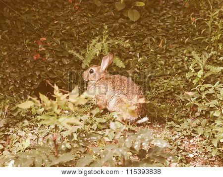 Retro Looking Hare Picture
