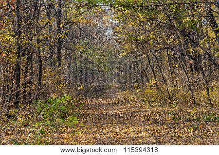 Mountain Path In Autumn Landscape. Horizontal Background Of Mountain Path, Trees And Nature In Autum