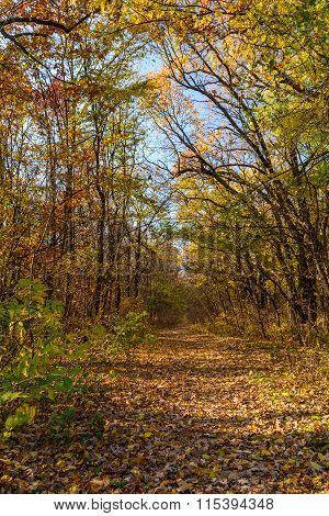 Mountain Path In Autumn Landscape. Vertical View Of Mountain Path, Trees And Nature In Autumn Fall..