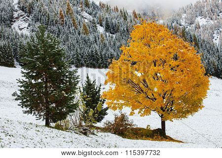 One colour tree in Dolomites and in the background is the mountain.