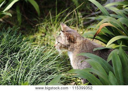 Cat In The Bush