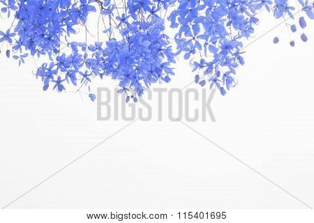 indigo flower on white background. flower hearth valentine.