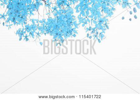 Indigo Flower On White Background