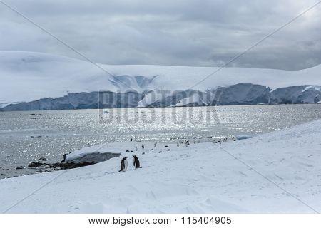 Gentoo Penguins on Icebergï¼?antarcticã??