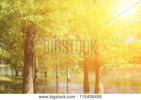 Vibrant forest with beautiful leaves in trees near lake in day.
