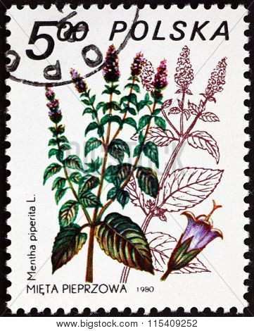 Postage Stamp Poland 1980 Peppermint