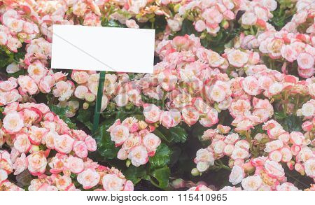 Blank Label In The Field Of Begonia With Water Spray For Your Design,selectivefocus