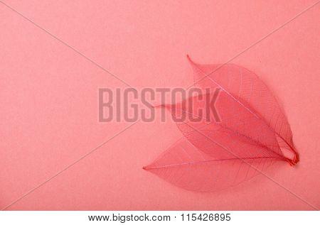 Three Red Skeleton Leaves On Pink Paper