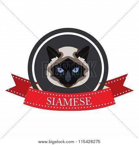 Flat Icon Pedigreed Cat Siamese