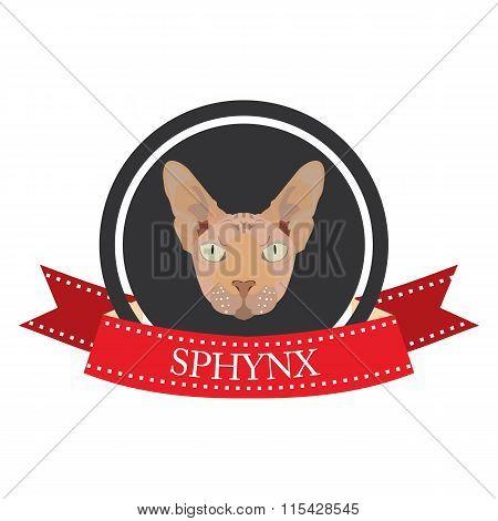 Flat Icon Pedigreed Cat Sphynx