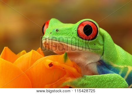 Portrait of a green tree frog