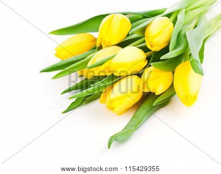 Spring Flower Yellow Tulips Bouquet Isolated On White Background.