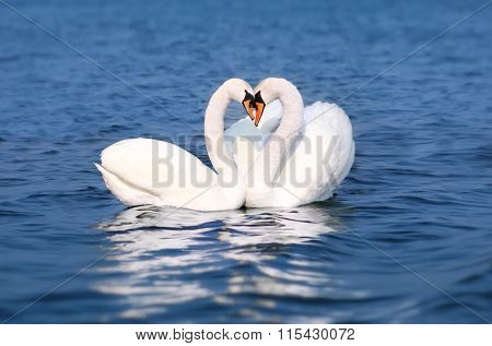 Swan Fall In Love, Birds Couple Kiss, Two Animal Heart Shape