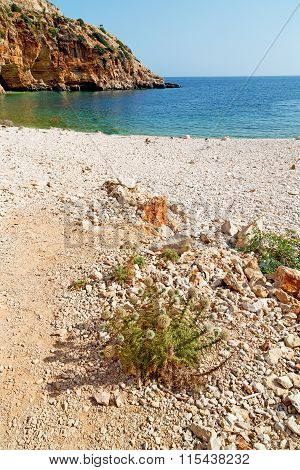 Asia In Thurkey Antalya Lycia Flower