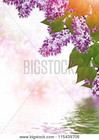 Spring. Lilac Branch