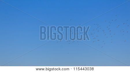 Bird Swarm On Blue Sky Background