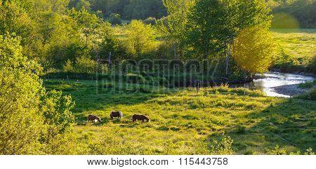 Horses in a pasture meadow near Greenwood, Nova Scotia