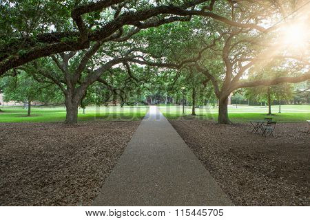 walkway through green garden in America.