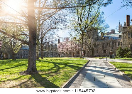 walkway through princeton university, USA.