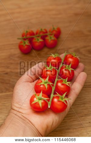 Man Holding Cluster Tomatoes In His Hands