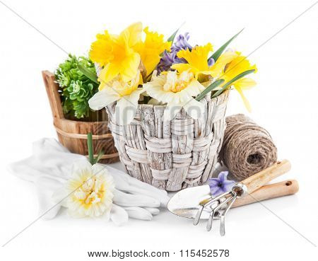 Spring flowers in basket with garden tools. Isolated on white background
