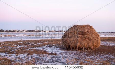Salt Marsh Haystack