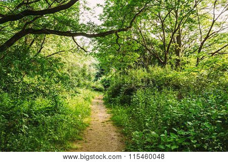 Lane, Path, Pathway in summer deciduous forest Trees