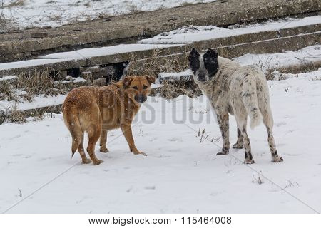 Two Homeless Dog On The White Snow. Pets