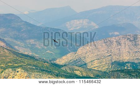 Eagle flying over beautiful landscape of the Verdon Gorge in Fra