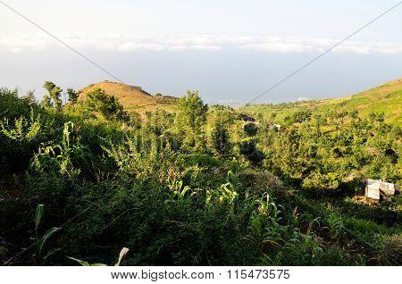 Crops In Ribeira Filipe