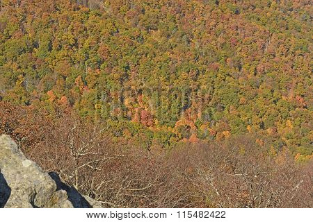 Falls Colors In An Appalachian Valley
