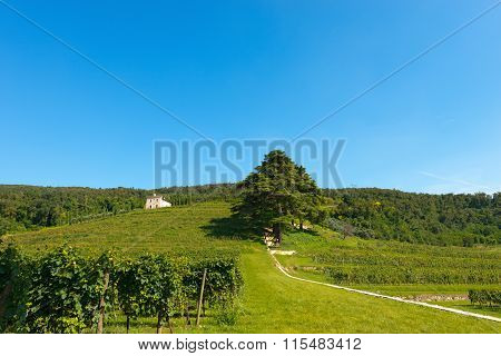Hills With Vineyards Near Verona - Italy
