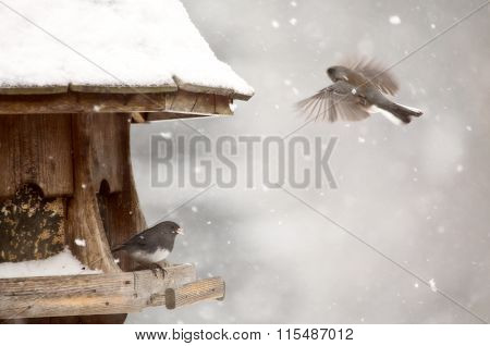 Birds At Feeder In Winter