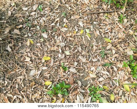 dry leaves on ground