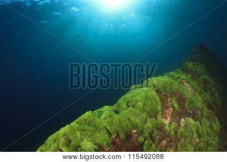 Green Algae on underwater rocks in sea