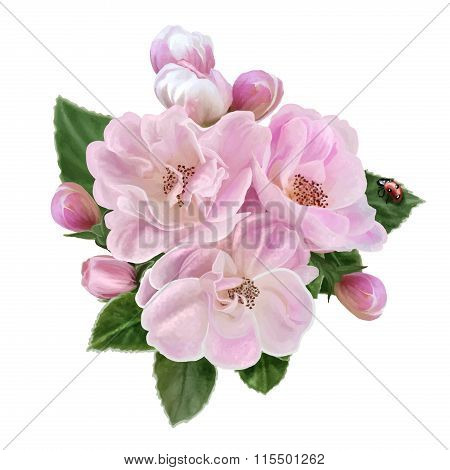 Branch Pink Apple Blossoms