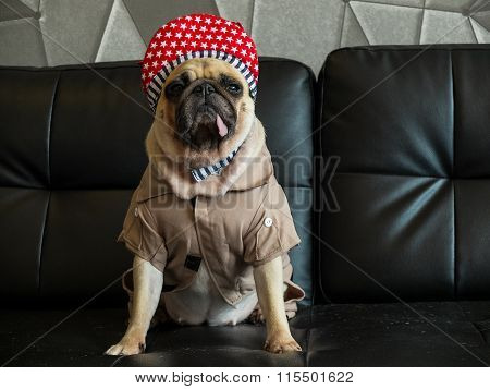 Close-up Cute Dog Pug Bored With Hip Hop Hat On Black Sofa In Room Look Out Side ,  Tongue Pacifier