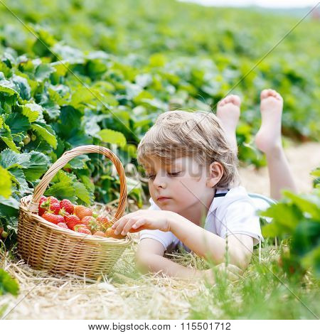 Little kid boy picking strawberries on farm, outdoors.