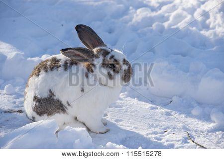 Speckled Bunny Sitting In Snowy Garden