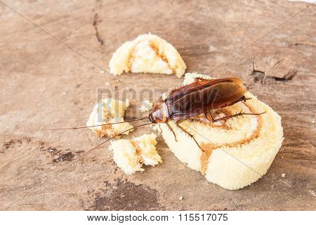 Cockroach Eating A Bread