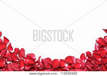 Beautiful Red Roses Petals  On White Background. Valentine's Day, Anniversary Etc Background.